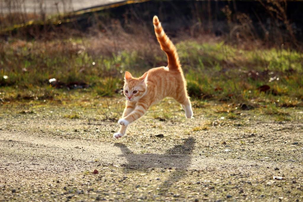 cat-1184727_1920
